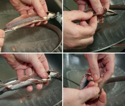 como limpiar boquerones o anchoas paso a paso